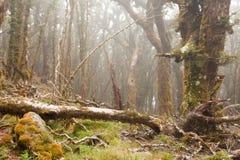 Virgin mountain rainforest of Marlborough, NZ Royalty Free Stock Image