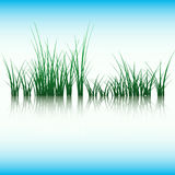 Virgin nature. Grass and sky. Royalty Free Stock Photo