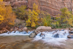 Virgin River Fall Scenic. The virgin river flowing through zion national park utah in fall Royalty Free Stock Photos