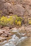 Virgin River in Fall Royalty Free Stock Photography