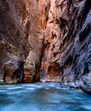 Virgin River flows through The Narrows of Zion Can Royalty Free Stock Images