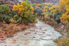 Virgin River Zion National Park in Fall Stock Photos