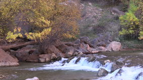Virgin River Zion National Park stock video