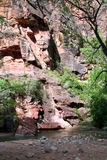 Virgin Riverbank. View of red canyon walls from the bank of the Virgin River Royalty Free Stock Photography