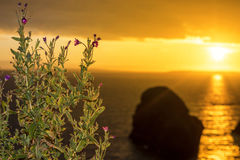 Virgin rock and wild flowers sunset Stock Photography
