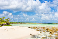 Virgin tropical beach with turquoise water in Cuba Stock Image
