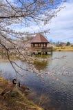 Virginia Cherry Blossoms Regional Park Stock Images