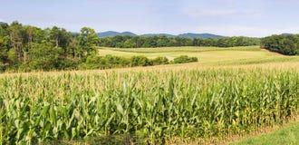 Virginia Cornfield und Berge Lizenzfreie Stockbilder