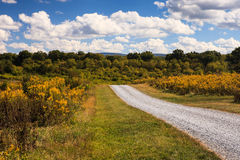 Virginia Country Road Through Goldenrod Wildflowers. Landscape of a country road through fields of seasonal yellow goldenrods in Boyce, Virginia under a Royalty Free Stock Photos