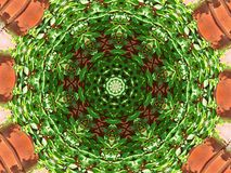 Virginia Creeper Kaleidoscope Royaltyfri Fotografi