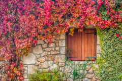 Virginia creeper on stone walls Stock Photos