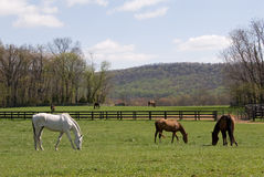 Virginia Horse Farm Stock Photo