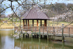 Virginia Meadowlark Gardens Spring Gazebo Arkivbilder