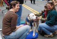 Virginia Pet Adoption Event Stock Photo