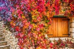 Virginia ranka på stenväggar fotografering för bildbyråer