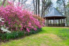 Virginia Spring Azalea Garden Royalty Free Stock Image