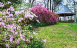 Virginia Spring Azalea Garden Stock Image