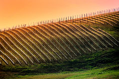 Virginia Vineyard Royalty Free Stock Photos