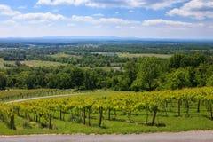Virginia Wine Country stock foto