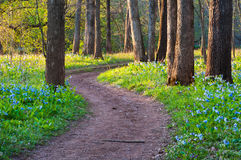 Virginia Woodland Trail with Spring Bluebells Stock Photography