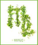 virgo созвездия Стоковое фото RF