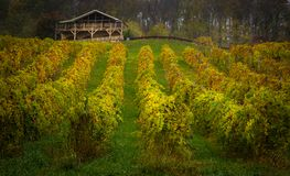 Viriginawijnmakerij buiten Bluefield Virginia stock foto's