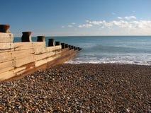Virilhas do mar Imagem de Stock