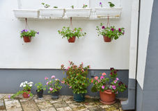 Virpazar villiage, Montenegro. Flowers in the pots near the wall of building Royalty Free Stock Photography