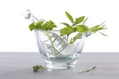 Virtù della pianta aromatica in fitoterapia Immagini Stock