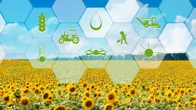 Virtual screen with digital icons, sunflower field background. Agriculture monitoring icons on sunflower field background, smart farming and agritech concept stock photos