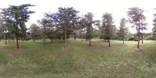 Virtuell verklighet för UHD 4K 360 VR av en stad parkerar rekreationsområde Träd och grönt gräs på höst- eller sommardagen lager videofilmer
