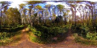 Virtuelle Realität UHD 4K 360 VR eines Stadtparkerholungsgebiets Bäume und grünes Gras am Herbst- oder Sommertag stock footage