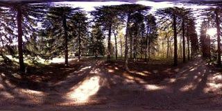 Virtuelle Realität UHD 4K 360 VR eines Stadtparkerholungsgebiets Bäume und grünes Gras am Herbst- oder Sommertag stock video footage
