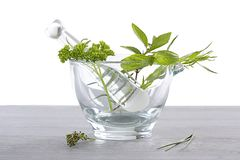 Virtues of aromatic plant in phytotherapy Stock Images