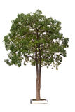 Virtuous prince Tree Stock Photography