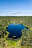 Viru沼泽的小风景湖 库存图片