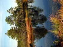 Viru Bog. Is part of Lahemaa national park, Estonia Stock Image