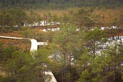 Viru Bog in Lahemaa National Park in Estonia Royalty Free Stock Photos