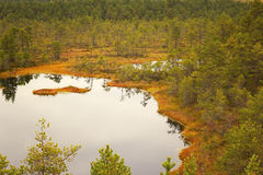 Viru Bog in Lahemaa National Park in Estonia Stock Photography