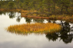Viru Bog in Lahemaa National Park in Estonia Stock Photos