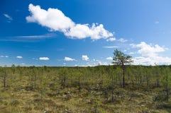 Viru bog reserve area under blue sky Stock Images