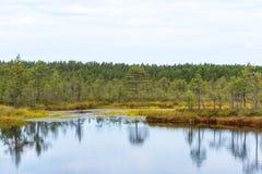 Viru bog Viru raba in the Lahemaa National Park in Estonia. Viru bog study trail stock photos