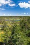 Viru bogs area on summer Stock Images