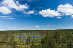 Viru bogs area on summer, top view Stock Photography