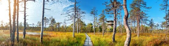 Viru bogs at Lahemaa national park Stock Image