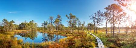 Viru bogs at Lahemaa national park Stock Images