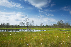 Viru bogs at Lahemaa national park Royalty Free Stock Photos