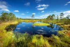Viru bogs at Lahemaa national park Stock Photos
