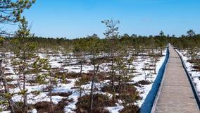 Wooden boardwalk through beautiful forest and swamp - Viru raba in Estonia. Viru raba in Estonia - spring Stock Image