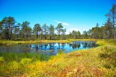 Viru Raba swamp. Viru Raba swamp lake in Estonia Royalty Free Stock Image